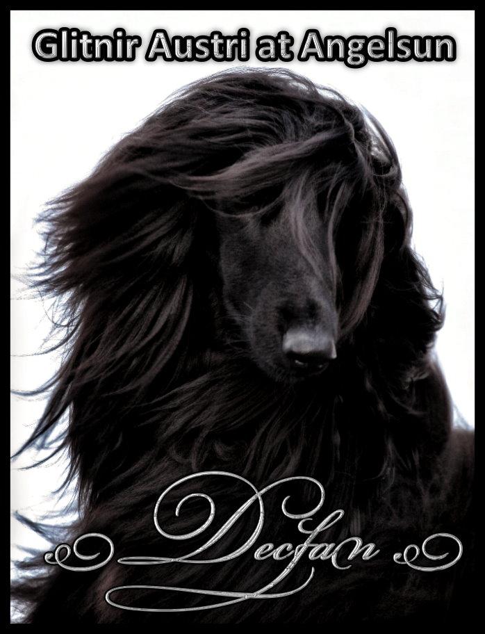 Declan (Glinir Austri)-Exclusively Owner Handled -17 months