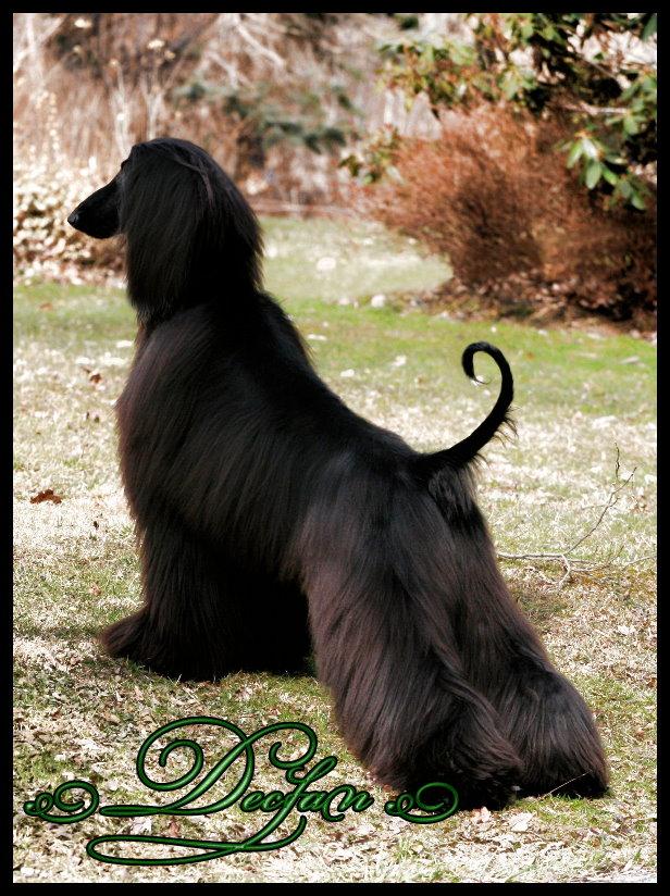 Declan (Glinir Austri)-Exclusively Owner Handled 19 months old