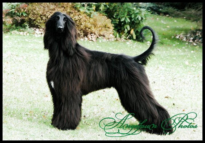 Declan (Glinir Austri)-Exclusively Owner Handled -15 months