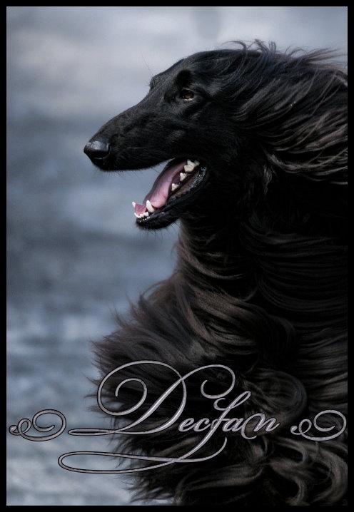 Declan (Glinir Austri)-Exclusively Owner Handled 20 months old