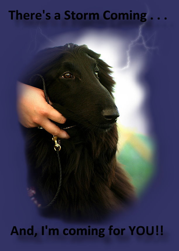 Declan (Glinir Austri)-Exclusively Owner Handled